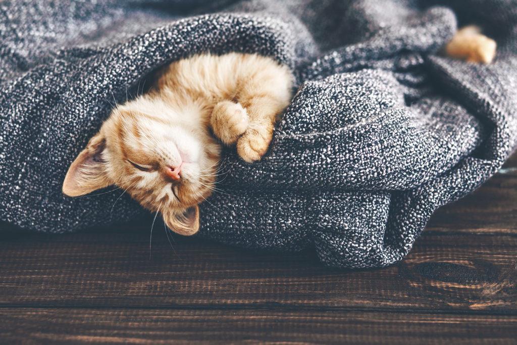 Foto Katzenbaby schlafend